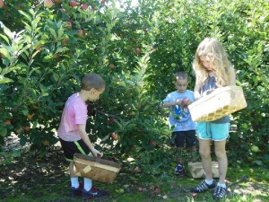 Apple-Pickin
