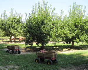 pickin-apples-wagon-orchard-lg