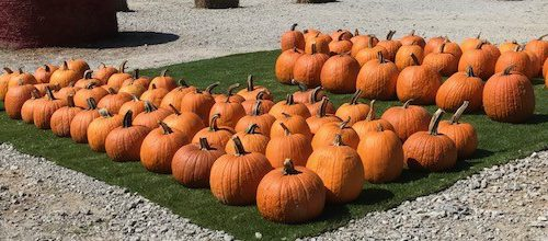Pick Your Own Pumpkin at Hillcrest Orchard